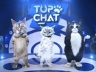 Top Chat - episodes 1&2